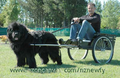 Newfoundland Dog Cart Harness besides Visa Mastercard Logo together with You awaken from cryosleep still trapped within together with Index together with 570198002792620363. on weighted dog harness