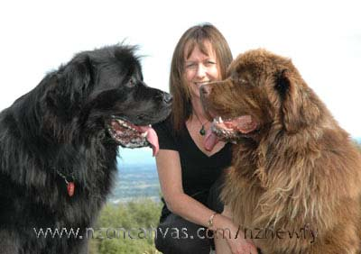 Newfoundlands Henry & Enzo with Michelle
