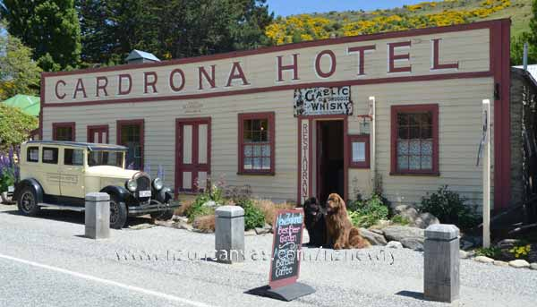 Newfs Henry & Enzo at the Cardrona Hotel
