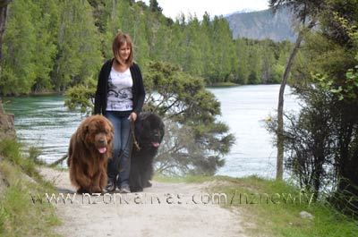 Newfoundlands Henry & Enzo beside the Clutha River