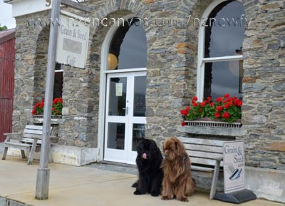 Newfoundlands Henry & Enzo at Old Cromwell